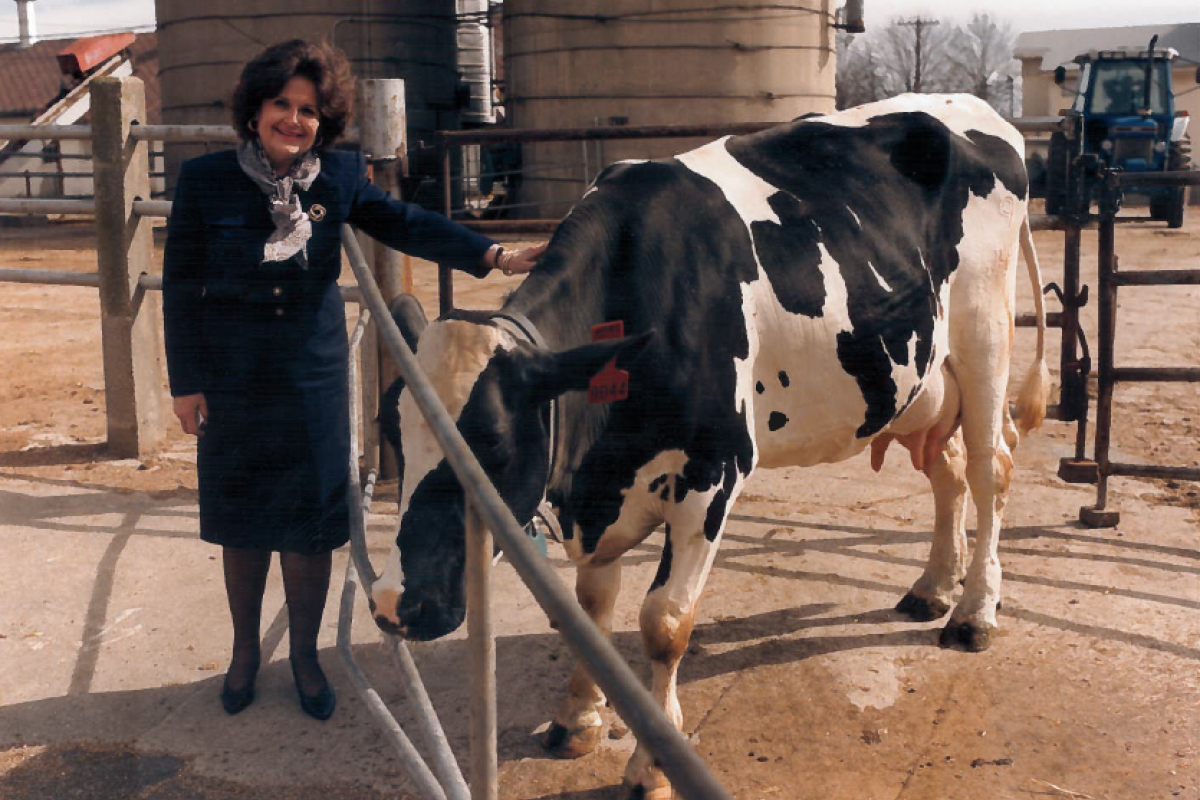 Louise Slaughter petting a cow on a dairy farm in the 1980s