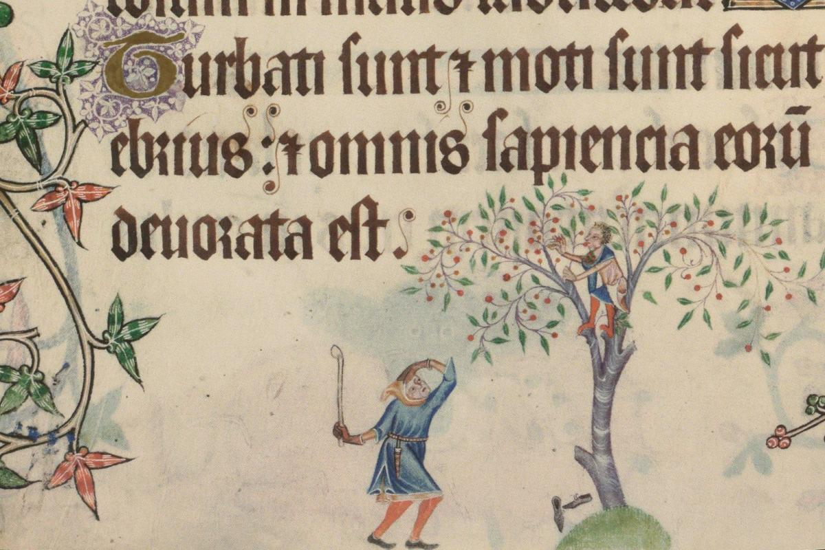 A teen from the Middle Ages stealing fruit (Psalter, c.1325-40)