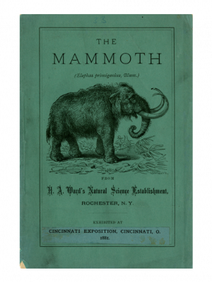 Ward Project - Mammoth